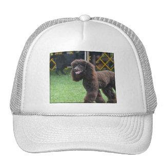 Irish Water Spaniel Mesh Hats