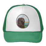 Irish Water Spaniel Hats