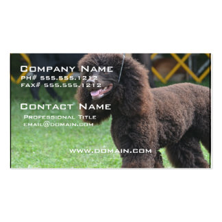 Irish Water Spaniel Pack Of Standard Business Cards