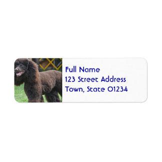 Irish Water Spaniel Return Address Label