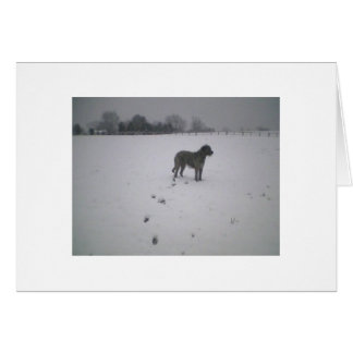 Irish wolfhound in the snow note card