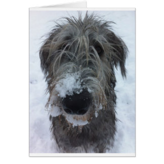 irish wolfhound playing in the snow card