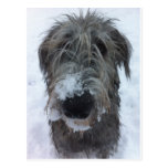 irish wolfhound playing in the snow postcard