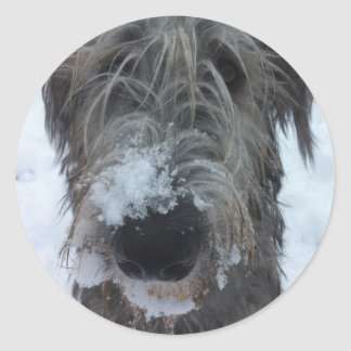 irish wolfhound playing in the snow round sticker