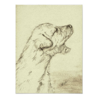 Irish Wolfhound Puppy Poster