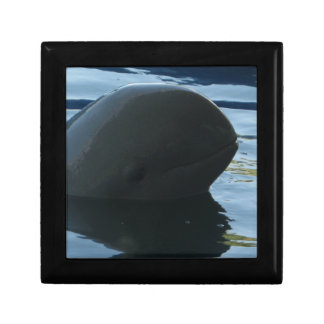 Irrawaddy Dolphin Peek-A-Boo Gift Box