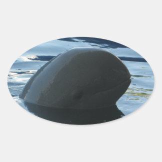 Irrawaddy Dolphin Peek-A-Boo Oval Sticker