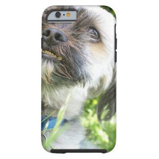 Irresistable Doggie Face Phone Case