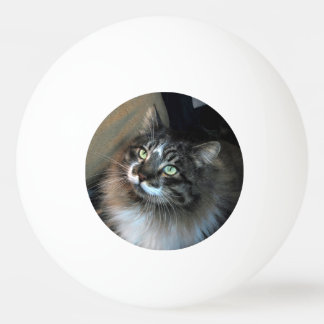 Irresistible Cat One Star Ping Pong Ball
