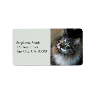 Irresistible Cat Zorro Address Labels