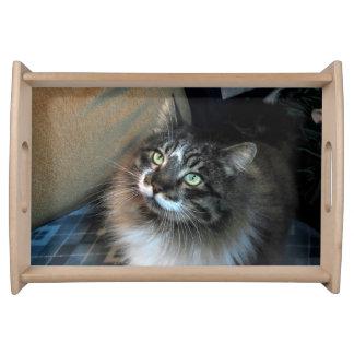Irresistible Cat Zorro Serving Tray