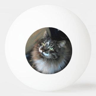 Irresistible Cat Zorro Three Star Ping Pong Ball
