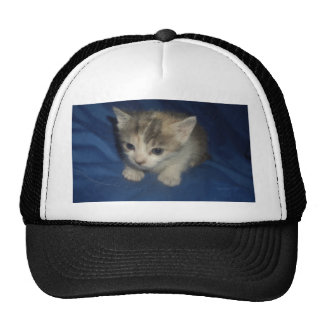 Irresistible Kitty Cap
