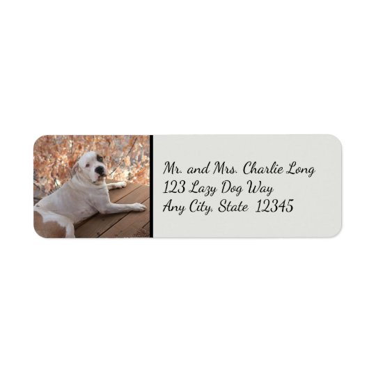 Irresistible Porch Dog Return Address Labels