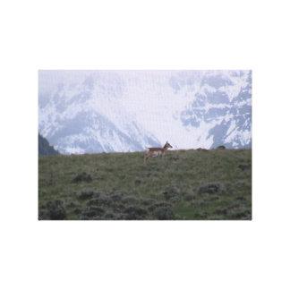 Ishawooa Wyoming Fauna Mammals Deer Pronghorn Elk Stretched Canvas Print