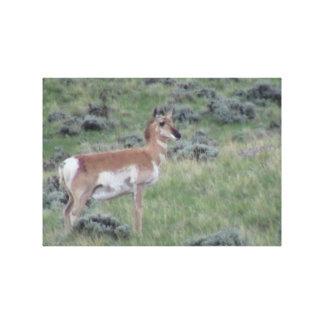Ishawooa Wyoming Fauna Mammals Deer Pronghorn Elk Canvas Print