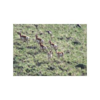 Ishawooa Wyoming Fauna Mammals Deer Pronghorn Elk Gallery Wrap Canvas