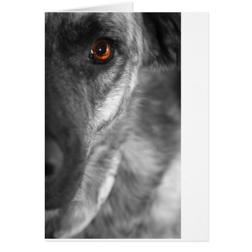 Isis the Devious Dog Cards