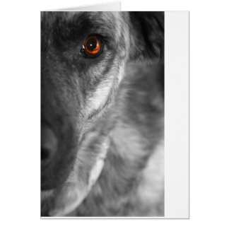 Isis the Devious Dog Greeting Card