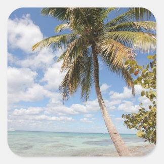 Isla Saona - Palm Tree at the Beach Square Sticker
