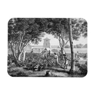 Island of Guam: Natives at Work in the Garden of t Magnet