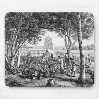 Island of Guam: Natives at Work in the Garden of t Mouse Mat