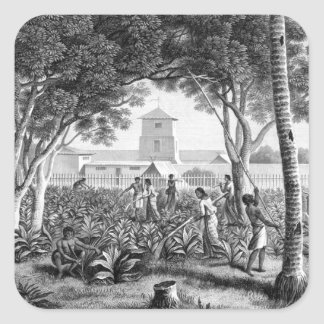 Island of Guam: Natives at Work in the Garden of t Square Sticker