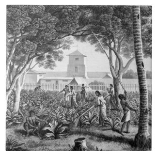 Island of Guam: Natives at Work in the Garden of t Tile