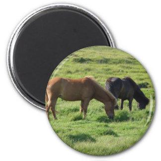 Islandpferde 6 Cm Round Magnet