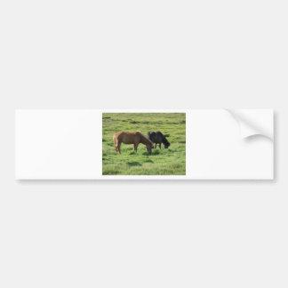 Islandpferde Bumper Sticker