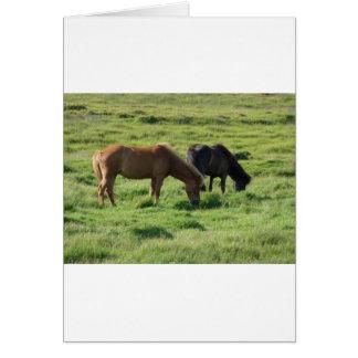 Islandpferde Greeting Card