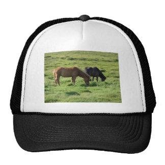 Islandpferde Trucker Hat