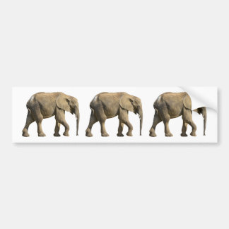 Isolated African elephant Bumper Sticker