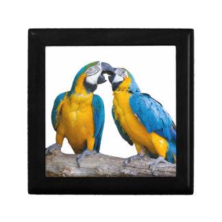 isolated ara ararauna parrot gift box