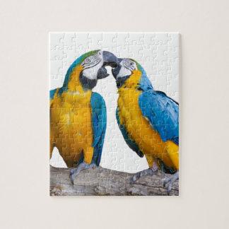 isolated ara ararauna parrot jigsaw puzzle