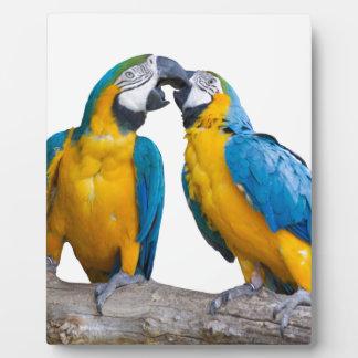 isolated ara ararauna parrot plaque