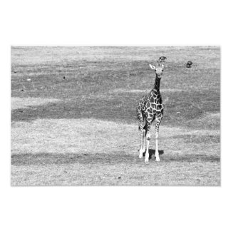 Isolated Giraffe Print Photo Print