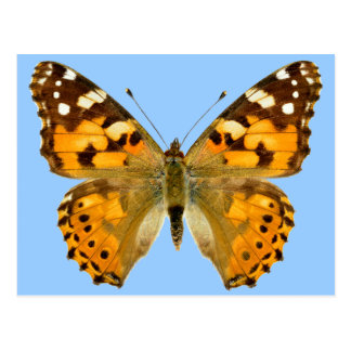 Isolated painted lady butterfly postcard