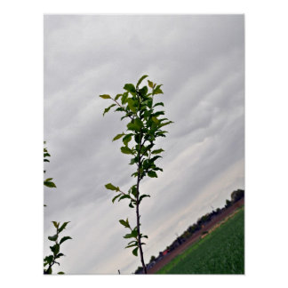 Isolated Plant Against Cloudy Sky Posters