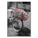 Isolated Red Colour Flowers Black and White Poster