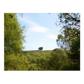 Isolated Trees OnThe Ridge Postcard