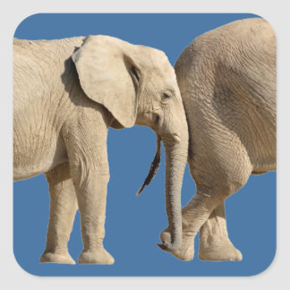 Isolated two African elephants Square Sticker