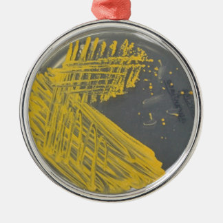 Isolation Streak of Bacteria Christmas Ornament