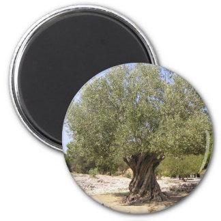 Israel Olive Tree 6 Cm Round Magnet