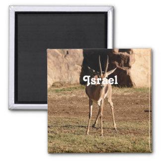 Israeli Gazelle Square Magnet