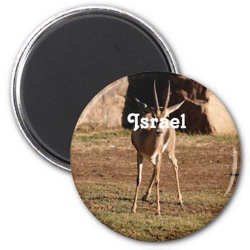 Israeli Gazelle Magnets