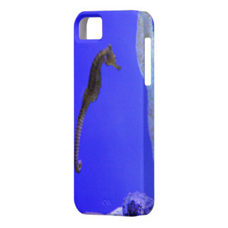 it founds sea horse iPhone 5 cases