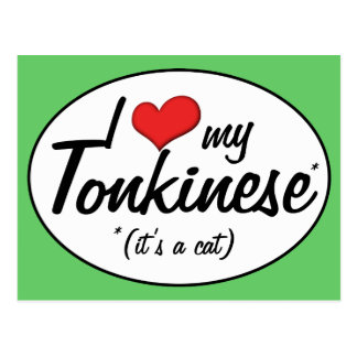 It s a Cat I Love My Tonkinese Post Card