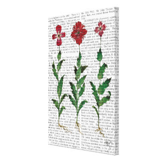 Italian Carnation 1 Canvas Print