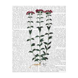 Italian Carnation Canvas Print